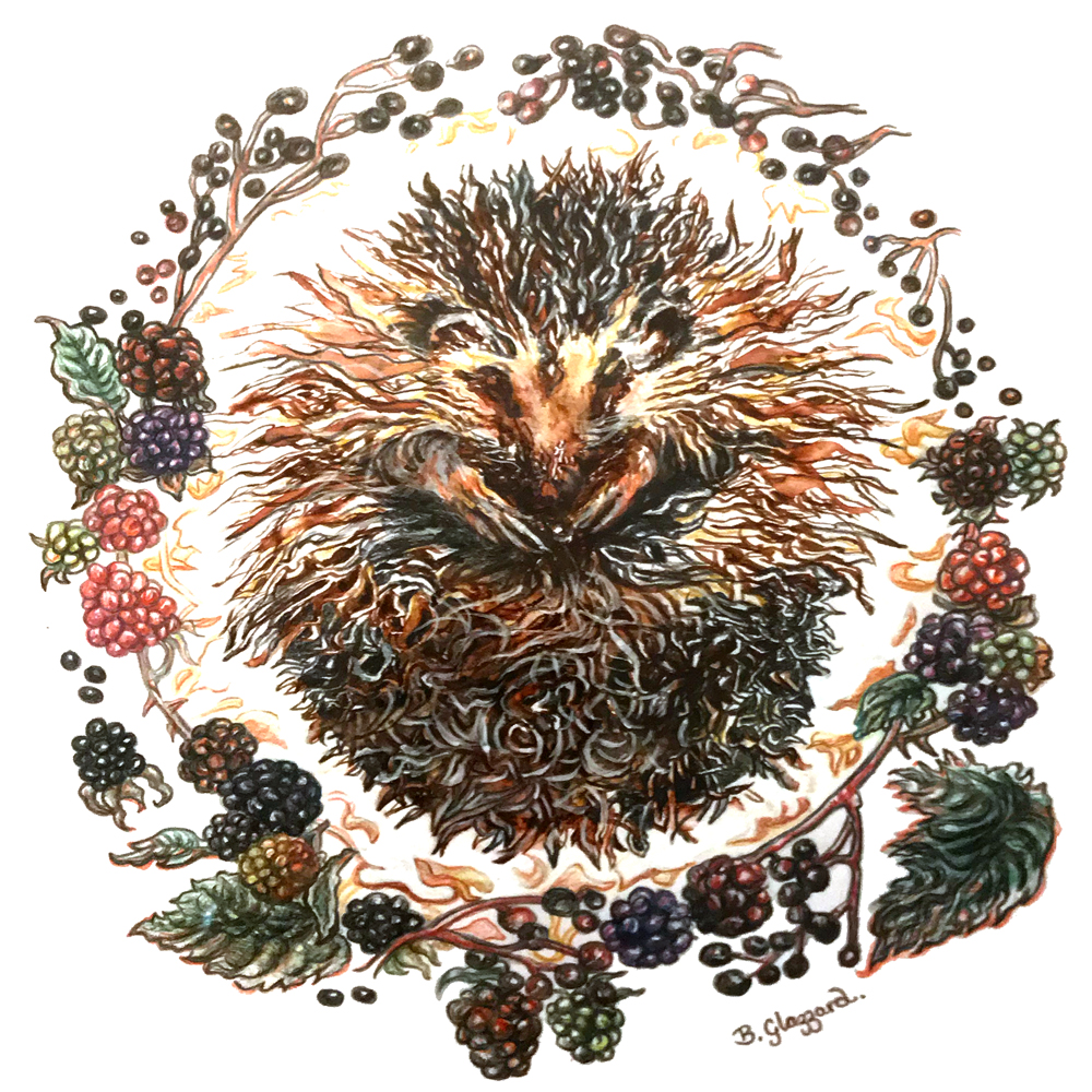 Hedgehog painting by artist Bronwen Glazzard